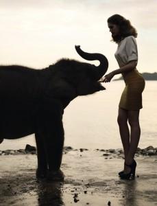 Elephant Pop 23