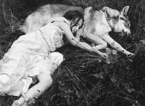 Sleep on Animal