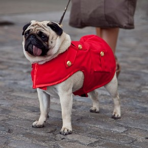 London Fashion Week Street Style Lenny the Pug
