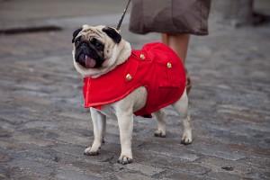 London Fashion Week Street Style Lenny the Pug