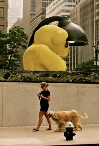 New York Bear