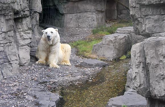 Panda at Central Park Zoo