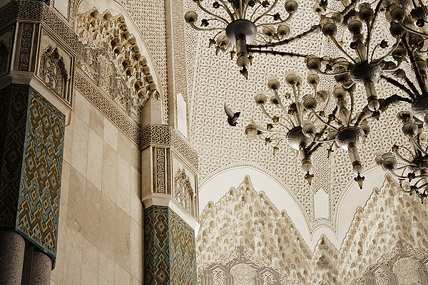 morocco mosque bird