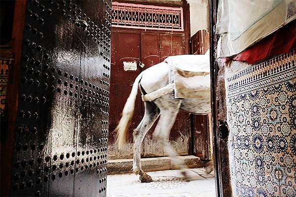 fes morocco 10