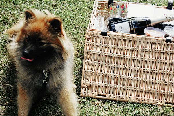 tart picnic hamper