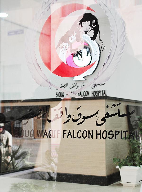 falcon hospital qatar