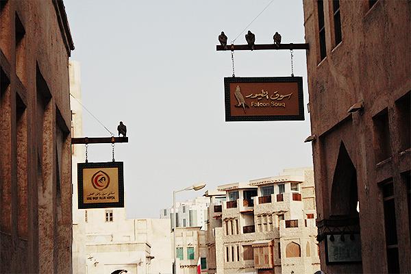 falconry qatar 3