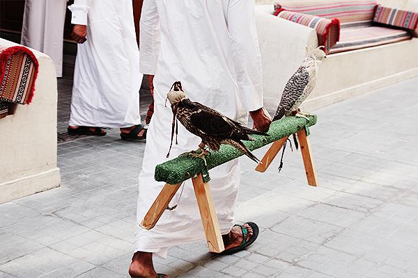 falconry qatar 4